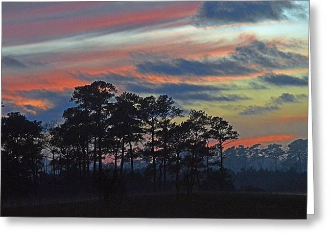 Greeting Card featuring the photograph Late Sunset Trees In The Mist by Bill Swartwout
