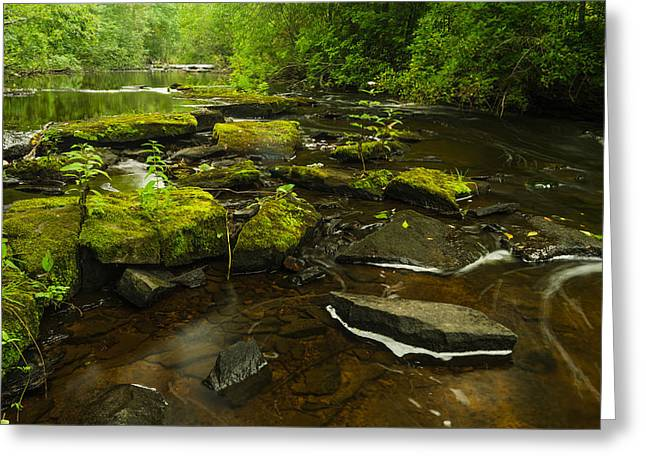 Laughing Fish River Greeting Card by Thomas Pettengill