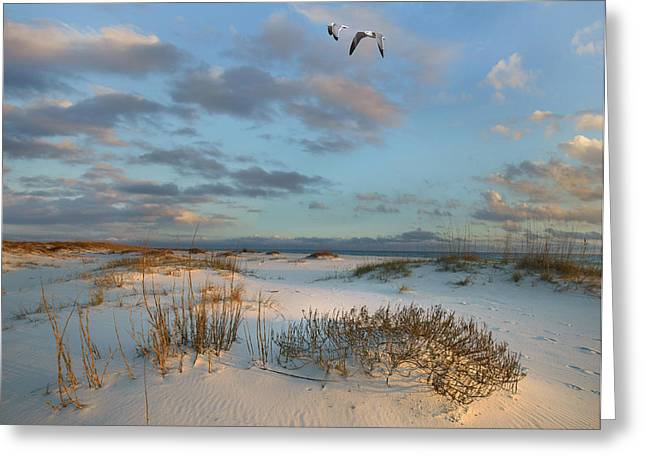 Laughing Gulls Flying Over Dunes Gulf Greeting Card by Tim Fitzharris