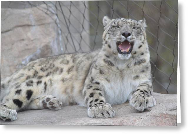Laughing Greeting Card by Michelle Hoffmann
