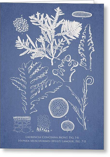 Laurencia Concinna And Hypnea Musciformis Greeting Card