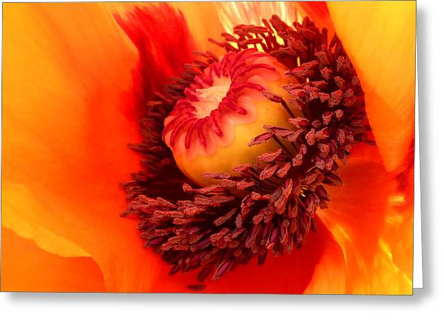 Lava Flow Greeting Card by Connie Handscomb