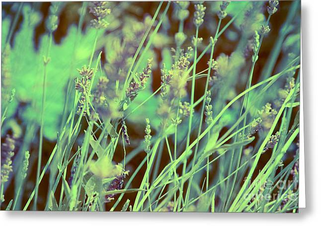 Lavander Infrared Greeting Card