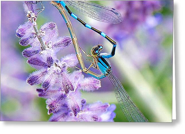 Lavendar And Dragonflies Greeting Card by Carol Toepke