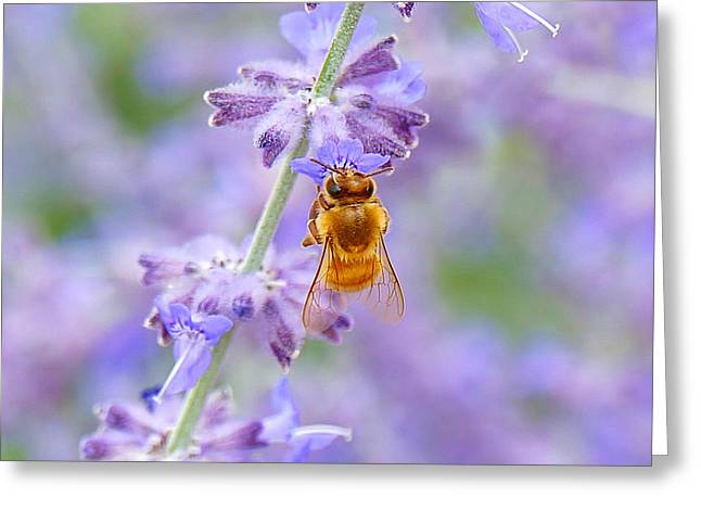 Lavendar Honey Bee Greeting Card by Carol Toepke