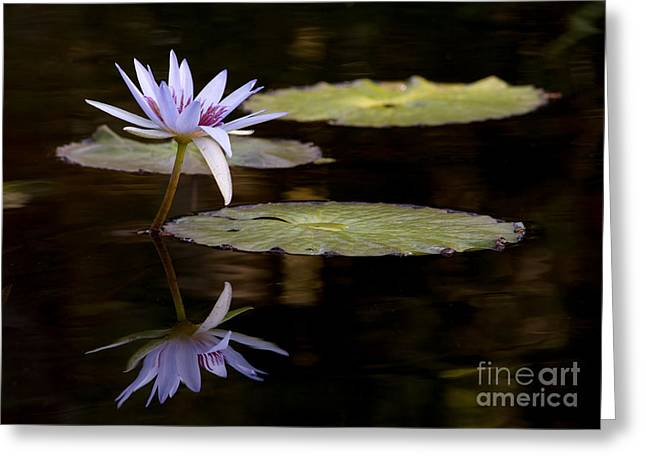 Lavendar Reflections In The Lake Greeting Card by Sabrina L Ryan