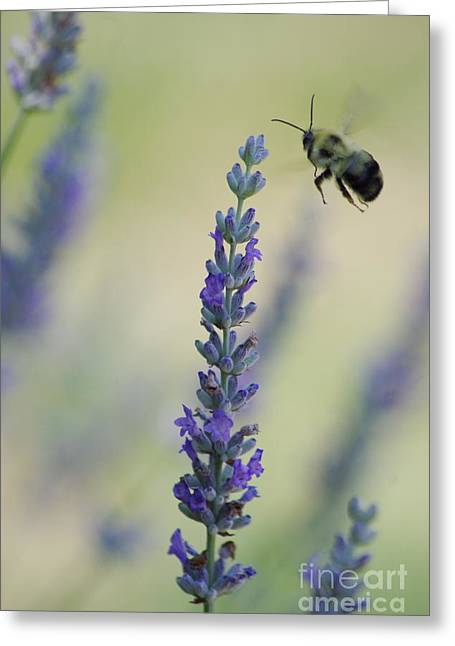 Lavender And The Bee Greeting Card by Tannis  Baldwin