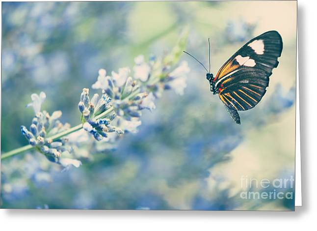 Lavender And The Butterfly Greeting Card by Juli Scalzi