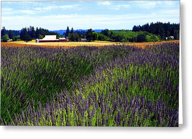 Lavender Barn Greeting Card by Mamie Gunning