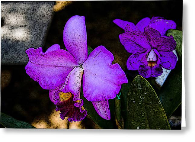 Lavender Catleya Orchid Greeting Card