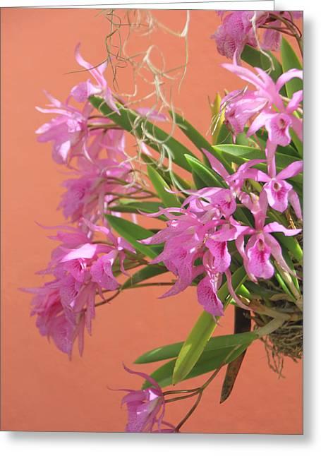 Lavender Cattleya Spray Greeting Card by Rosalie Scanlon