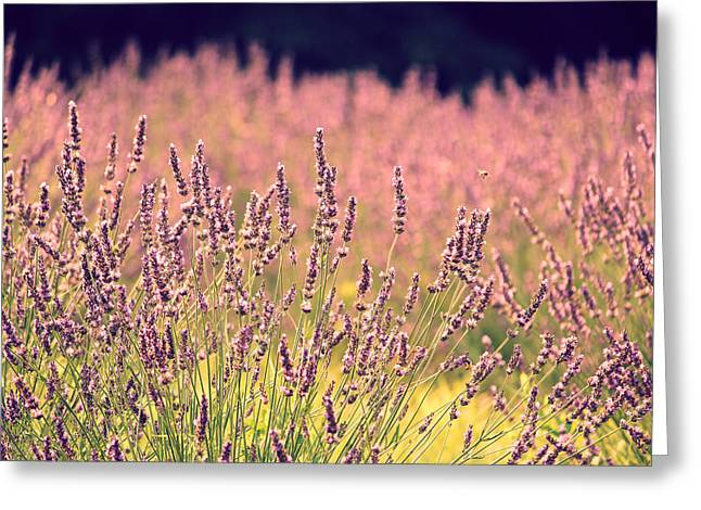 Greeting Card featuring the photograph Lavender Dreams by Lynn Sprowl