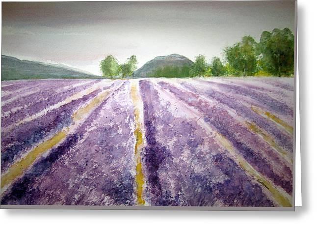 Lavender Fields Tasmania Greeting Card by Elvira Ingram