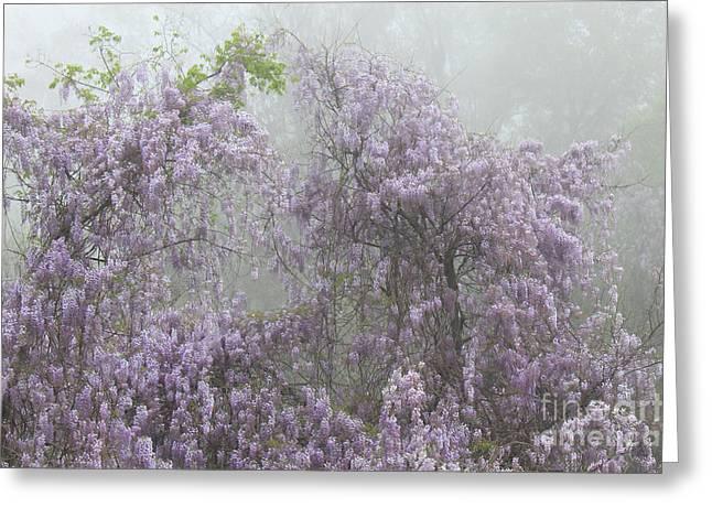 Lavender Fog Greeting Card by Leslie Kirk
