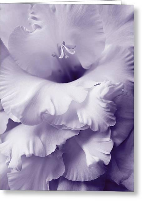 Lavender Lace Gladiola Flower Greeting Card
