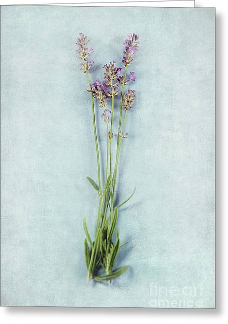 Lavender On Blue Greeting Card