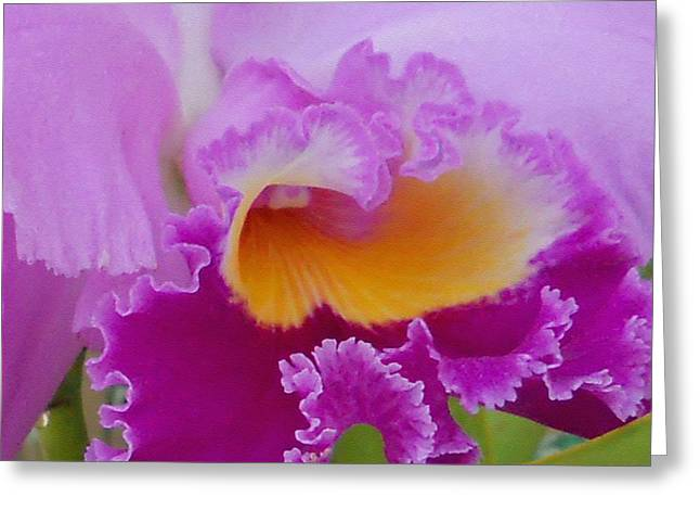 Lavender Orchid Greeting Card by Aimee L Maher Photography and Art Visit ALMGallerydotcom