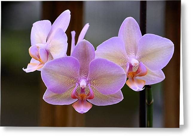 Lavender Orchid Greeting Card