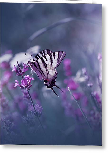 Lavender Queen... Greeting Card