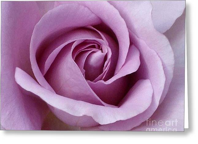 Lavender Rose Blossom 1 Greeting Card by Paul Clinkunbroomer