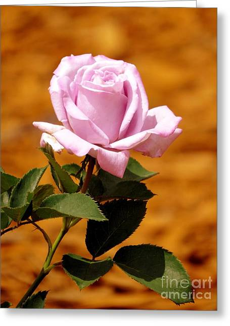 Lavender Rose Greeting Card by Zina Stromberg