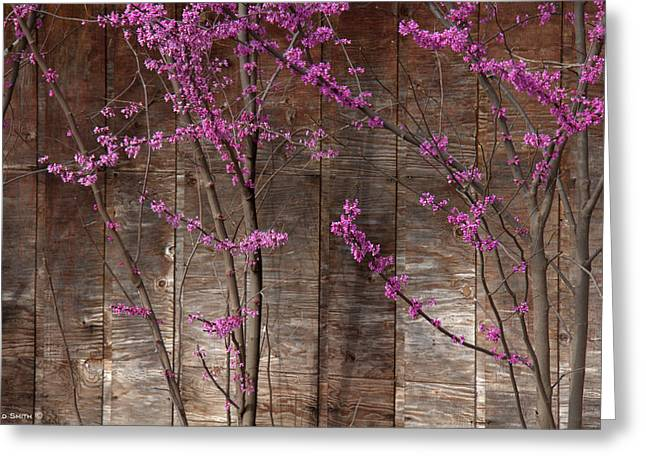 Lavender Shadows Greeting Card by Ed Smith