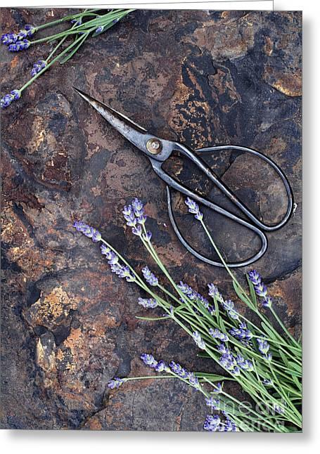 Lavender Greeting Card by Stephanie Frey
