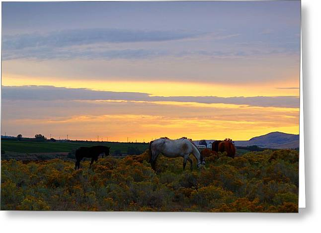 Greeting Card featuring the photograph Lavender Sunrise by Lynn Hopwood