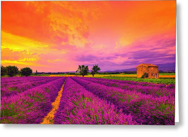 Lavender Sunset Greeting Card