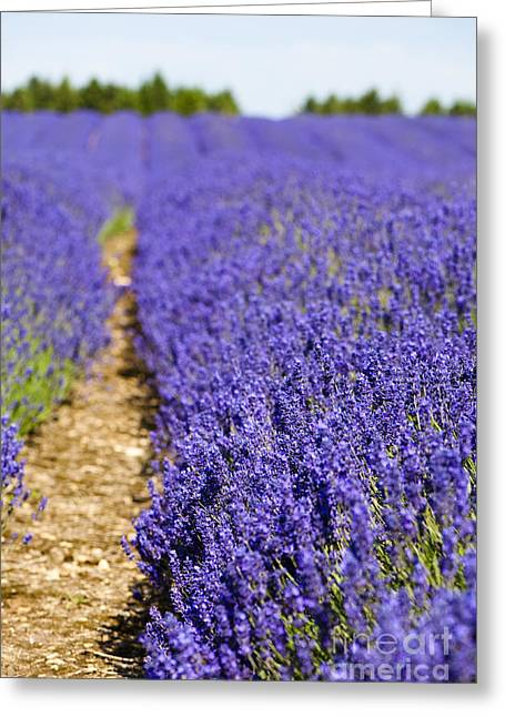 Lavender's Blue Greeting Card by Anne Gilbert