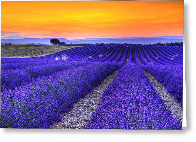 Lavender's Sunset Greeting Card