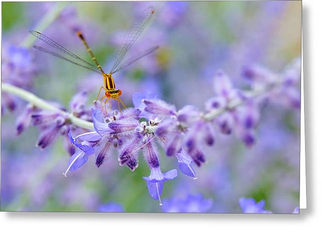 Lavender's Surprise Greeting Card by Carol Toepke