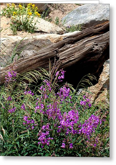 Lawn Lake Trail Greeting Card by Julie Magers Soulen