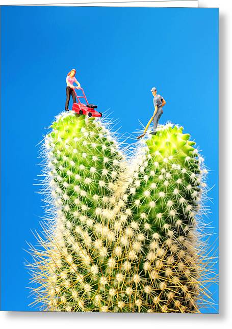 Lawn Mowing On Cactus Greeting Card by Paul Ge