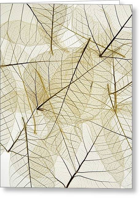 Layered Leaves Greeting Card by Kelly Redinger