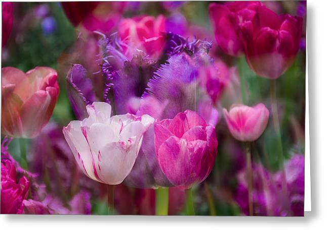 Layers Of Tulips Greeting Card by Penny Lisowski