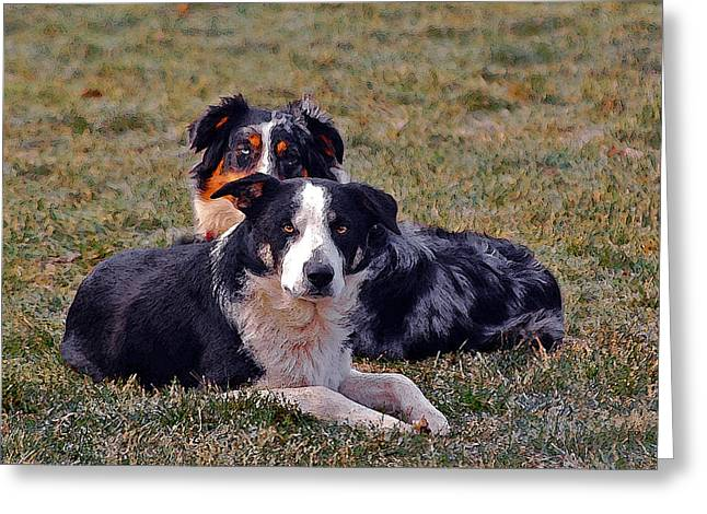 Lazy Canines Greeting Card by Brian Graybill