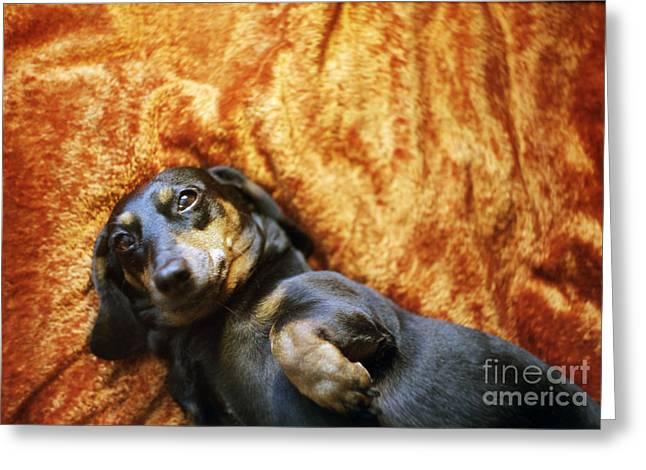 Lazy Dog Greeting Card by Angel  Tarantella