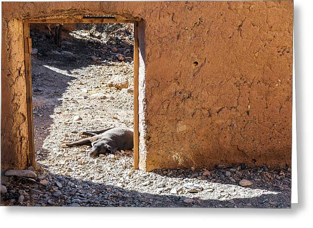 Lazy Dog In A Doorway Greeting Card