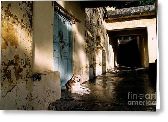 Lazy Dog Resting In The Afternoon Greeting Card by Eldad Carin