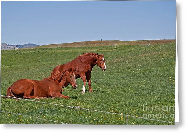 Greeting Card featuring the photograph Lazy Horses by Valerie Garner