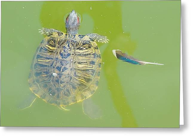 Lazy Summer Afternoon - Floating Turtle Greeting Card
