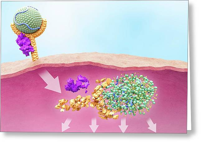 Ldl And Receptor Degradation With Pcsk9 Greeting Card by Maurizio De Angelis