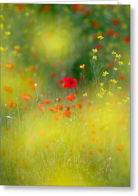 Le Coeur Greeting Card by Roeselien Raimond