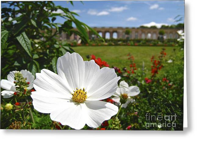 Le Fleur De Versailles Greeting Card by Suzanne Oesterling