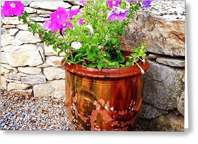 Anduze Flower Pot With Petunias Greeting Card