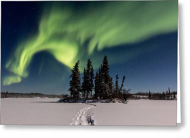 Leading The Way Greeting Card by Valerie Pond