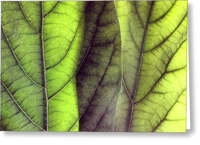 Leaf Abstract Greeting Card by Christy Beckwith