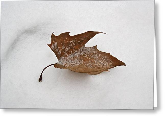 Leaf After The Snowstorm Greeting Card