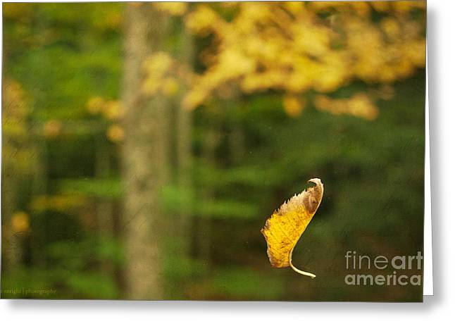 Leaf Aloft Greeting Card